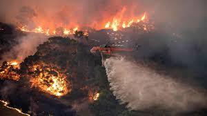 Mơ thấy cháy rừng đánh con gì