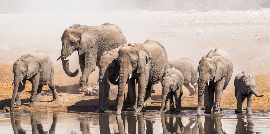 Mơ thấy voi đánh con gì?