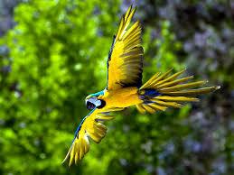 Mơ thấy chim