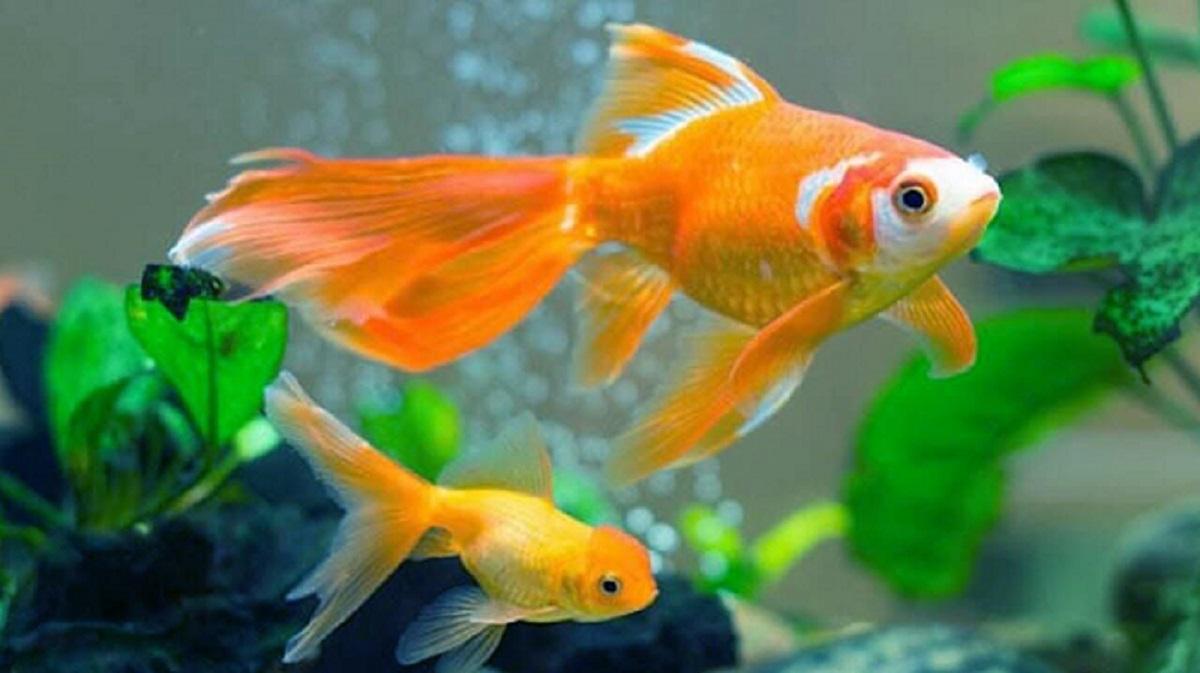 mơ thấy cá đang bơi
